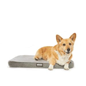 Snooz Dog Bed
